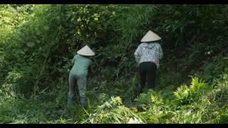 Download 提高越南人民收入和森林覆盖率 Video