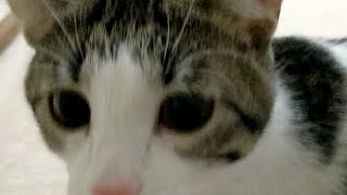 Download Kitten Close Up 2018-03-07 Video