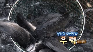 Download 대중성1위 국민횟감 우럭! [어영차바다야] Video
