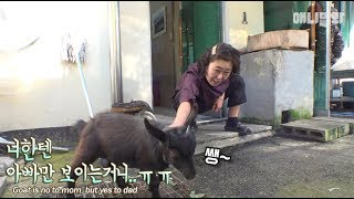 Download A goat that only likes her dad... Mom would be sad if she was their daughter IRL ㅠㅠ Video