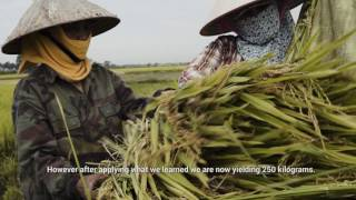 Download Transforming Cooperatives and Farmers' Lives - Viet Nam Video