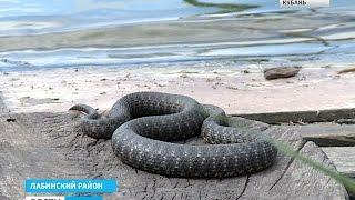 Download Во время рыбалки мужчину покусали 37 змей Video