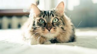 Download How to Train a Cat to Come When Called | Cat Care Video
