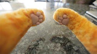 Download Cat Behavior Finally Explained Video