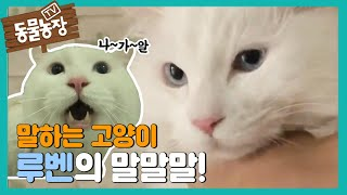 Download 말하는 고양이 루벤 @TV동물농장 20130707 Video