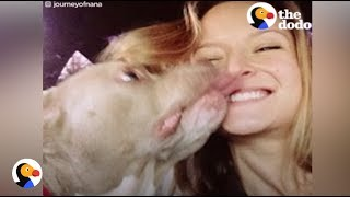 Download Pit Bull With No Ears Finally Finds Love | The Dodo Video