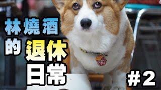 Download [連環泡]勤儉持家不浪費食物的好爸爸_林燒酒的退休日常#2 Video