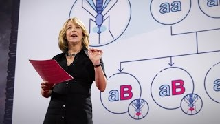 Download Gene editing can now change an entire species - forever   Jennifer Kahn Video