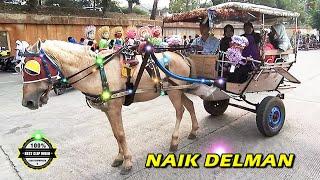 Download NAIK DELMAN ISTIMEWA ~ Lagu Anak Indonesia Terpopuler Sepanjang Masa👍 Video