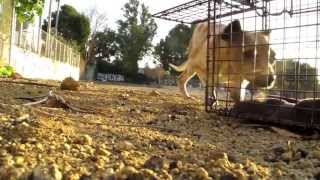 Download NEW ENDING - An Abused street dogs second chance - Ralph's rescue and rehab. Video