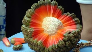 Download Top 10 Tropical Fruits You've Never Heard Of Video