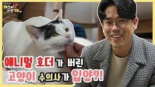 Download 애니멀호더에게 버려진 고양이들의 입양스토리 Video