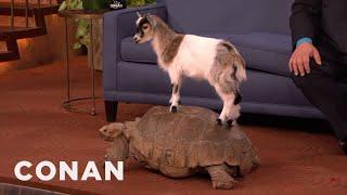 Download Animal Expert David Mizejewski: Capuchin Monkey, Caracal, Giant Tortoise & Goat - CONAN on TBS Video