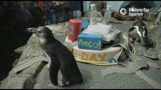 Download Happy Hatch Day, Amigo! Video