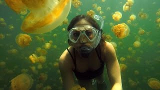 Download Ginger Zee Travels to Palau's Jellyfish Lake Video