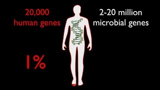 Download The Enormous Impact of Tiny Microbes with Rob Knight - Sages and Scientists 2016 Video