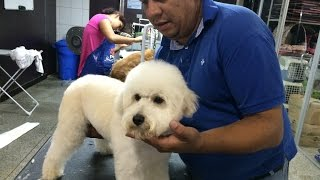Download AULA COMPLETA - POODLE Video