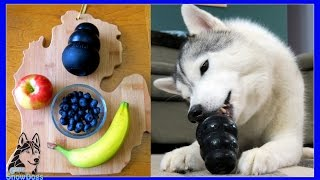 Download DIY DOG TREATS FROZEN FRUIT SALAD KONGS | Snow Dogs Snacks 48 Video