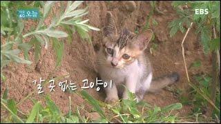 Download 다큐 오늘 - 갈 곳 없는 고양이 Video