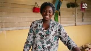 Download Elevage & production de poulets de chair à Oyem Video
