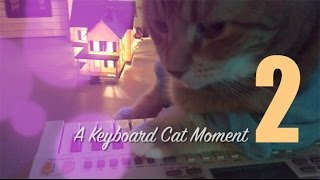 Download Keyboard Cat Moment 2 Video