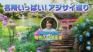 Download 磯山さやかの旬刊!いばらき『あじさい』 (平成29年6月9日放送) Video