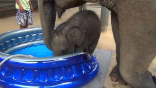 Download Baby Elephant Bath Time Part2 Video