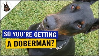 Download Do You Want a DOBERMAN? Check This!! Video
