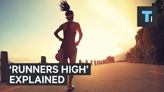 Download What happens to your brain when you get a ″runner's high″ Video