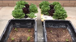 Download Soil growers can't handle this video! Video