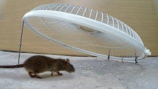 Download Electric fan guard Mouse / Rat Trap Video
