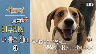 Download 세상에 나쁜 개는 없다 - 분리불안 끝판왕, 비구리의 나 홀로 집에 #003 Video