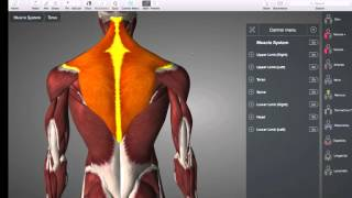Download Muscle quiz 1 answers Video