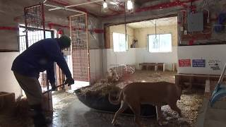 Download Cleaning the barn... Live Stream November 17, 2018 Video