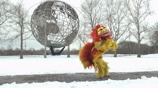 Download Queens Museum Chinese New Year Traditional and Hip Hop Lion Dance Video