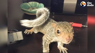 Download Rescued Baby Squirrel Is Queen Of Her New Home   The Dodo Video