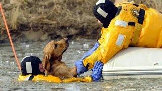 Download Heroes en la vida real - Rescate de animales Video