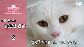 Download 고양이를 부탁해 - 석구, 후추의 잘못된 만남 #002 Video