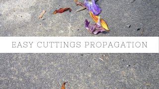 Download How to make a cuttings propagation box - low cost and easy! Video