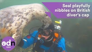 Download British diver has extremely close encounter with seal off Northumberland coast Video