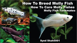 Download How to breed molly Fish ,facts,feeding, tankmates Hindi & Urdu with English sub Video