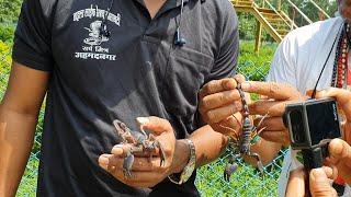 Download बिच्छू काटने पर घरेलू उपाय | What do home remedies do when scorpion is bitten Video