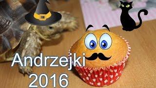 Download Vlog Andrzejki 2016 r Video