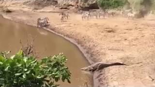 Download Croc Attack Video