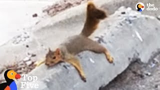 Download Exhausted Squirrel Mom Moves Babies To Safer Tree + Other Awesome Animal Moms | The Dodo Top 5 Video