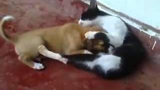 Download Cat feeding puppy 🐶 Video