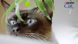 Download Cat Chow - Сила природы в каждом движении Video