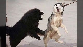 Download Funniest Animals - Awesome cute Pet Animals' Life Videos Video