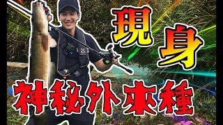 Download 宜蘭水溝竟釣到頭長的像蟒蛇的魚 騎單車跑遍冬山河 就為了與傳說中的怪物交手 漁樂爽報 (Fishing Fun News)【釣魚】EP14 日本語 翻訳 Video