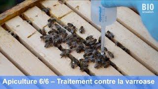 Download L'apiculture bio – Le traitement contre la varroase avec l'acide oxalique (partie 6/6) Video